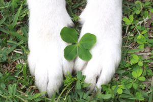 Dog pas and 4 leaf clover