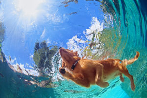 Tips to kep your dog safe this Summer