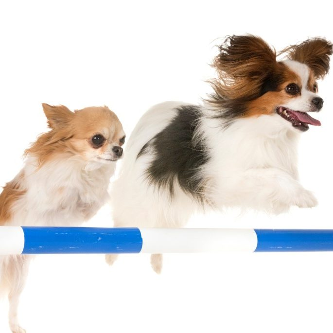 Paws to Consider dog agility training